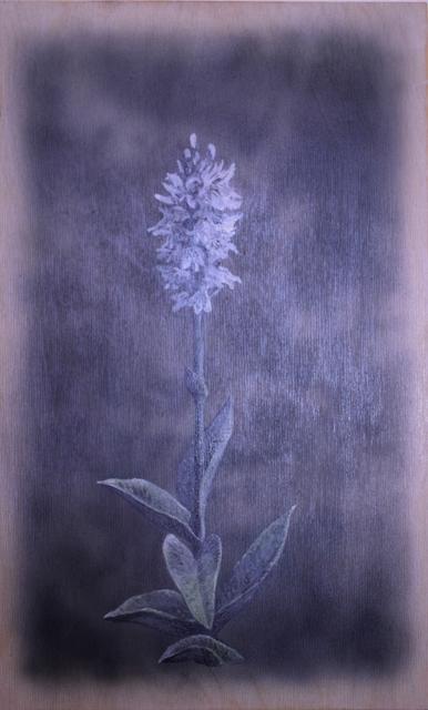 , 'Dactylorhiza Maculata,' 2019, Ani Molnár Gallery