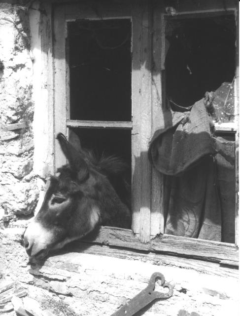 , 'Travaux des champs et animaux de la ferme,' c. 1950, Punta della Dogana