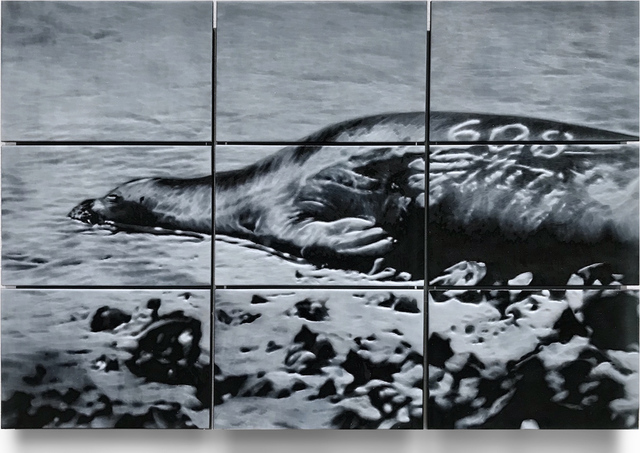 , 'HAWAIIAN MONK SEAL. LIVING FOSSIL OF THE SEA,' 2017, Traver Gallery