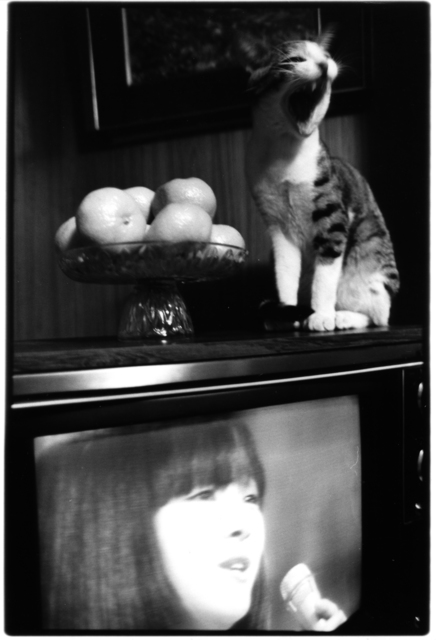 , 'Sasuke!! Dear my cat,' 1978, Michael Hoppen Gallery