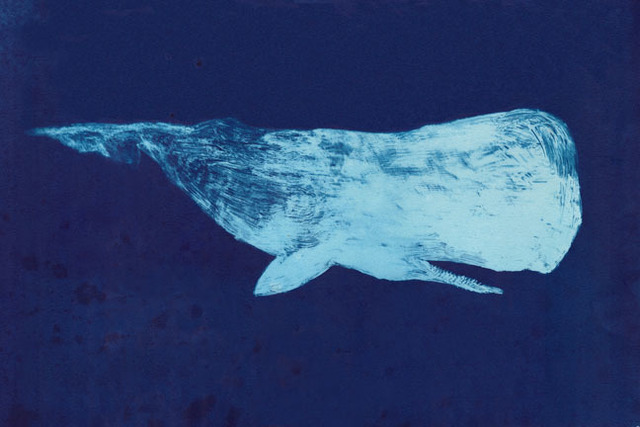 Scott Bluedorn, 'Moby Dick of the Deep', Print, Cyanotype print, ARC Fine Art LLC