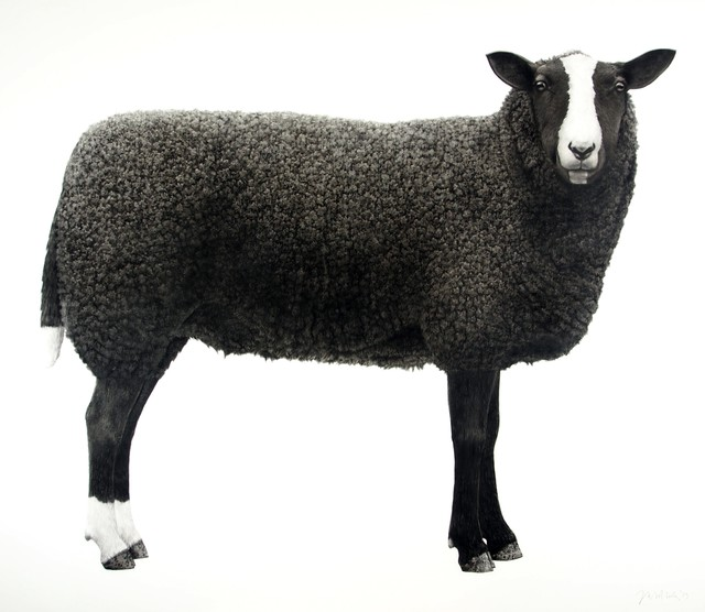 , ' Sheep ,' 2019, Purdy Hicks Gallery