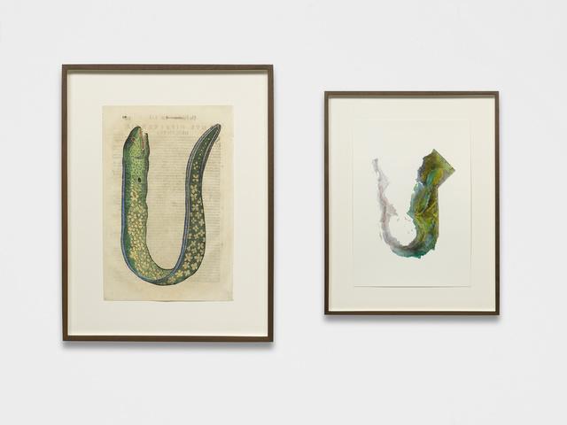 Anri Sala, 'Untitled (Muraena foemina/California)', 2018, kurimanzutto