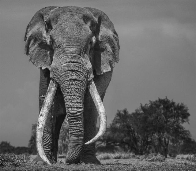 David Yarrow, 'Colossus', 2018, Photography, 315gsm Hahnemuhle Photo Rag Baryta Paper, Isabella Garrucho Fine Art