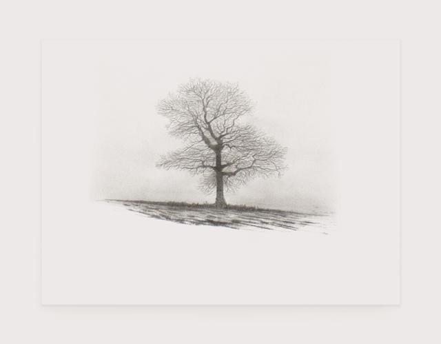 , 'Tree Study,' , Anima-Mundi