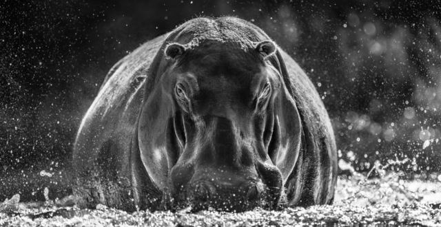 David Yarrow, 'Dexter', 2018, Photography, Photography, Visions West Contemporary