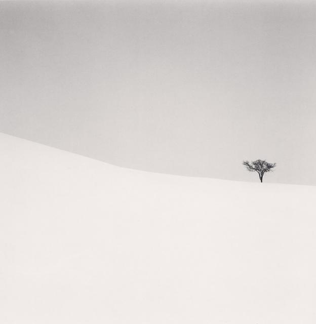 , 'Single Tree, Mita, Hokkaido, Japan,' 2007, photo-eye Gallery