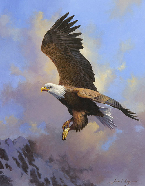 Adrian C. Rigby, 'Untitled - Bald Eagle', Heather James Gallery Auction
