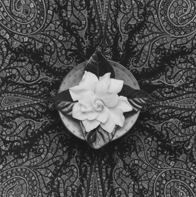 , 'Gardenia,' 1987, Galerie Thomas Schulte