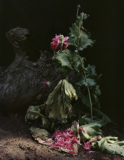", 'Untitled #1, from the series ""Understory"",' 2014, Tracey Morgan Gallery"