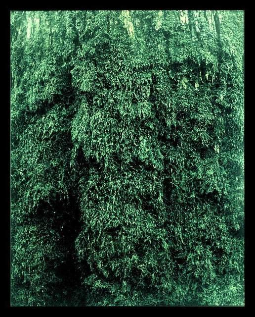 , 'Untitled,' 1998, Michel Soskine Inc.