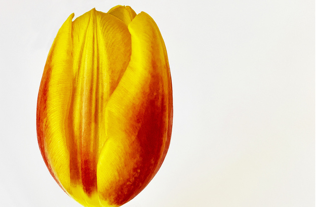 Joel Grey, 'Tulip', ca. 2018, Staley-Wise Gallery