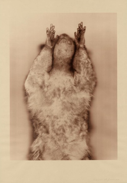 , 'Brown Greater Galago (Sepia),' , Gemini G.E.L. at Joni Moisant Weyl
