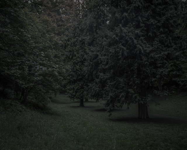 Chris Bennett, 'From the series Darkwood, #22', 2014, Circuit Gallery