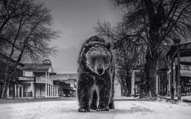 David Yarrow, 'Out of Towner', ca. 2019, Photography, Archival Pigment Print, Samuel Lynne Galleries