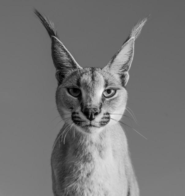 David Yarrow, 'Harry Potter', 2019, Galleri Fineart