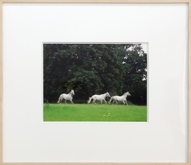 , 'Three white horses,' 2001, Travesia Cuatro