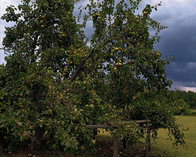 William Christenberry, 'Pear Tree with Storm Cloud, near Akron, Alabama, August', 2002, Pace/MacGill Gallery