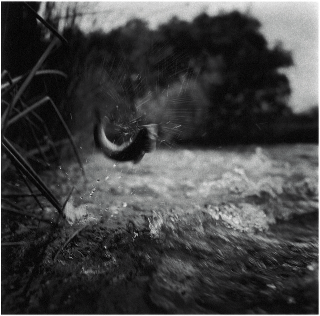 Charles Lindsay, 'Brown Trout, California', 1996, Aperture Foundation