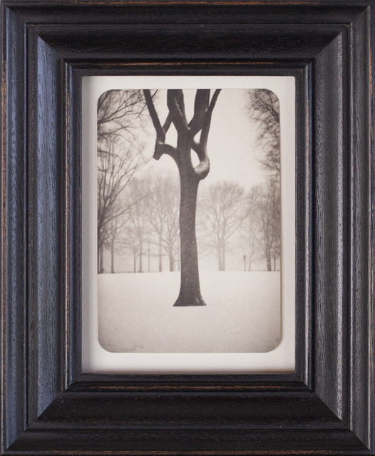 , 'Tree, Central Park,' 2007, Gallery 270