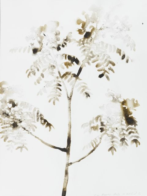 , 'Tree of Heaven Ailanthus altissima (69 Bedford St, Manhattan),' 2016, Salon 94