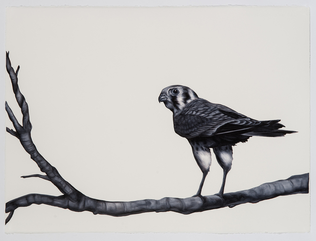 Shelley Reed, 'Kestral', 2016, Drawing, Collage or other Work on Paper, Oil on arches paper, Visions West Contemporary