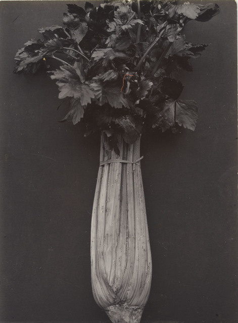 Charles Jones, 'Celery Wright's White', Probably executed about 1895-1910, Davis & Langdale Company, Inc.