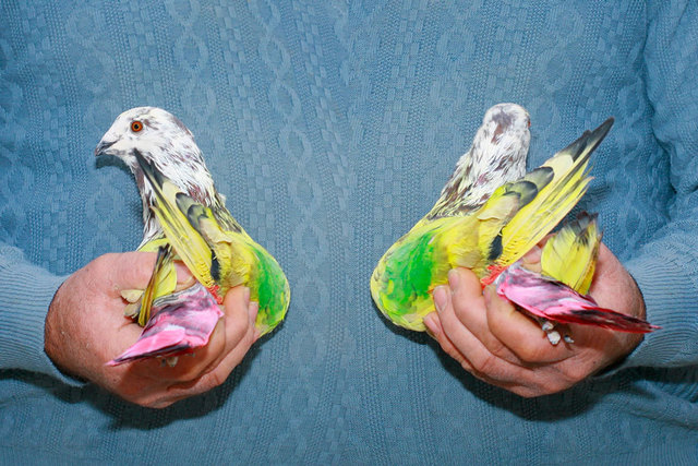 , 'Untitled (pigeon on hand),' 2011, TJ Boulting