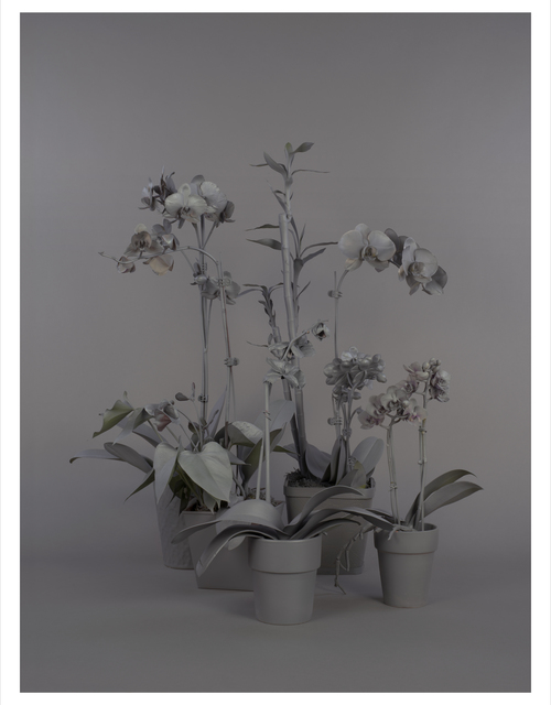 , 'Neutral Orchids (Cluster 1),' 2016, Catharine Clark Gallery
