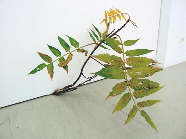 , 'Weed 71-08,' 2008, Andréhn-Schiptjenko