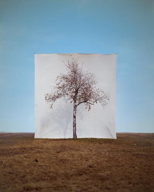 Myoung Ho Lee, 'Tree #1', 2006, Yossi Milo Gallery