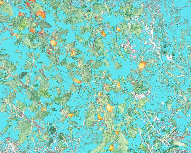 Aaron ROTHMAN, 'Wildflowers (PVGM1)', 2015, Rick Wester Fine Art