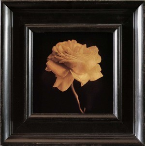 , 'Rose,' , Catherine Couturier Gallery
