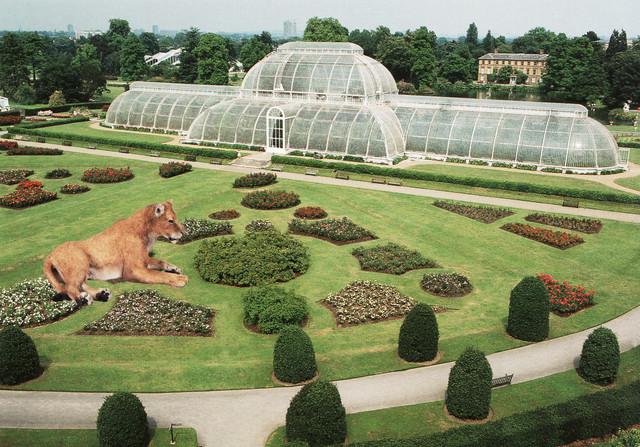 , 'Lioness at Kew Gardens,' 2013, Wilding Cran Gallery