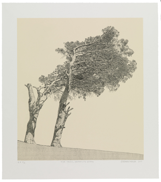 , 'Pine Trees, University Estate,' 2017, Galerie Ernst Hilger