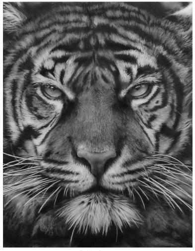 , 'Study for Bob's Tiger,' 2014, David Benrimon Fine Art