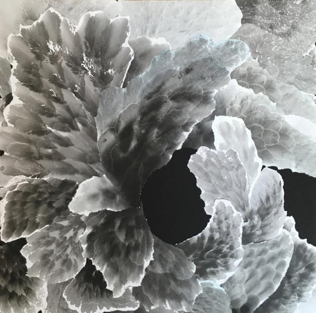 , 'Furling X,' , Chicago Art Source