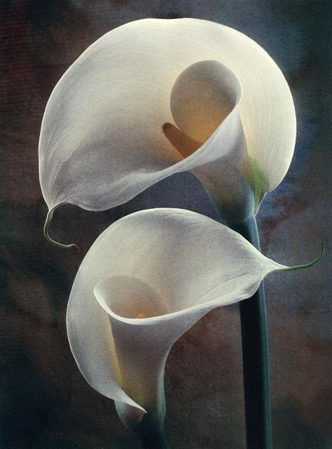 , 'Yin Yang Lilies,' , Gallery 270