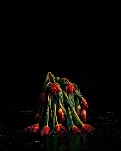 , 'Flowers V,' , CHRISTOPHE GUYE GALERIE