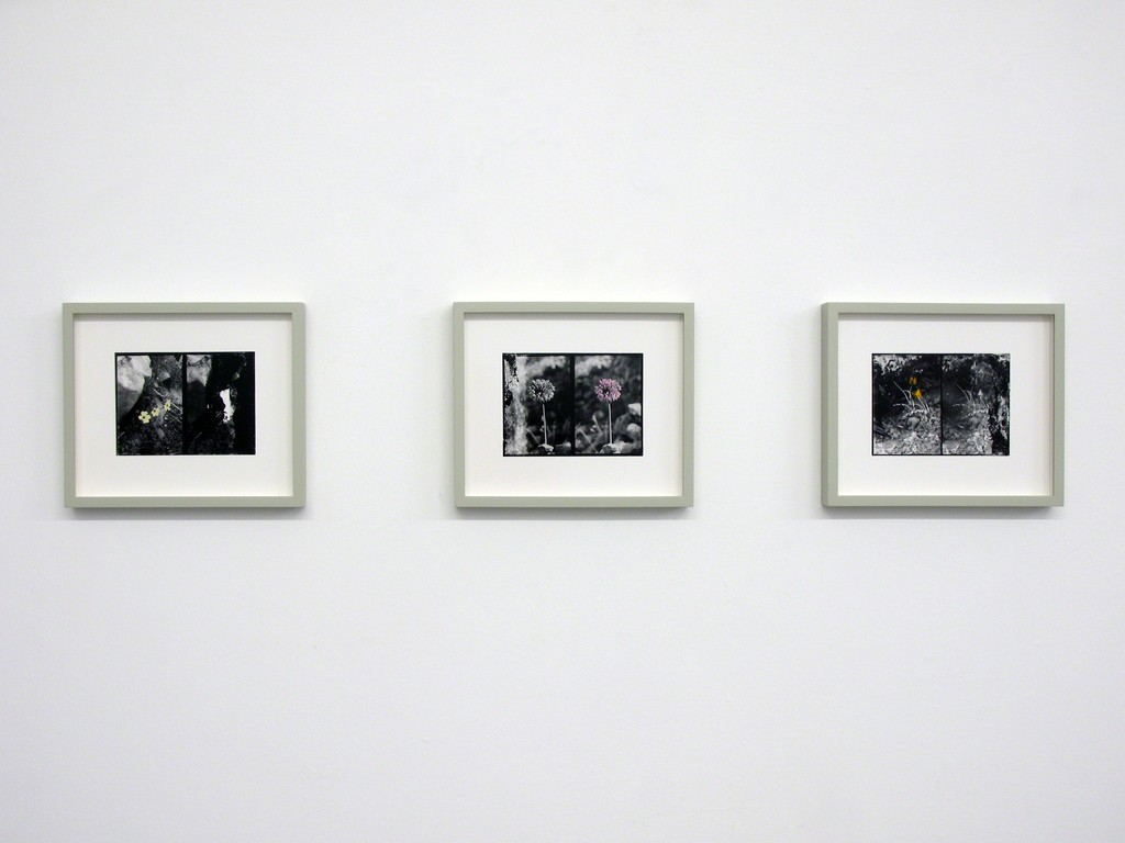 Uriel Orlow, Double Vision (Native Plants), 2013
