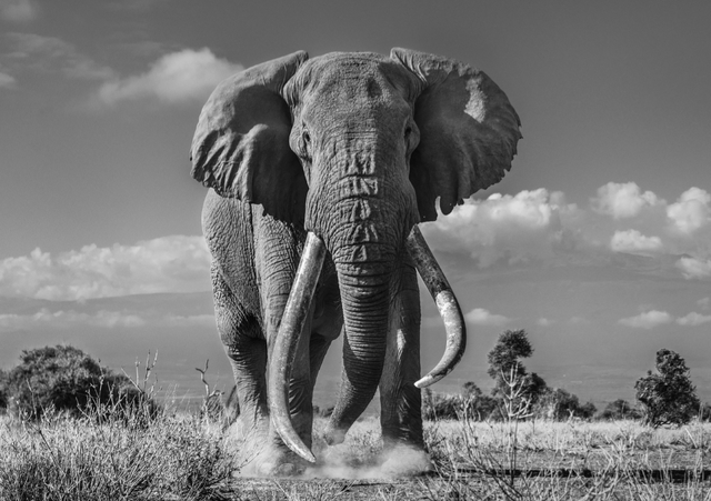 David Yarrow, 'Tim', 2019, Hilton Asmus