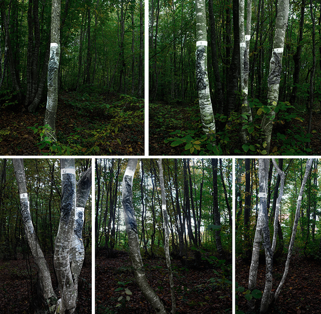 , 'Impression From The Beech Forest,' 2015, Daire Gallery