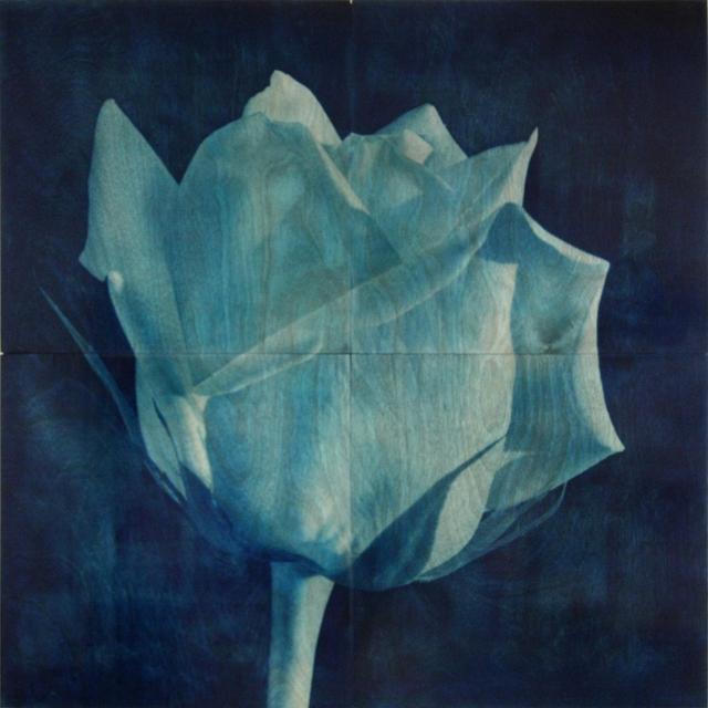 , 'Rose 3,' 2013, Newzones