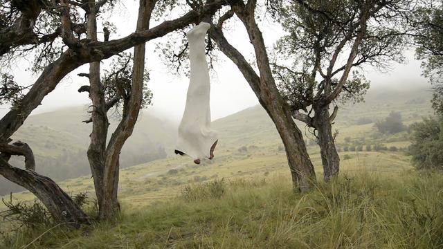 , 'Suspendido en la Queñua ,' 2014, Barbara Thumm