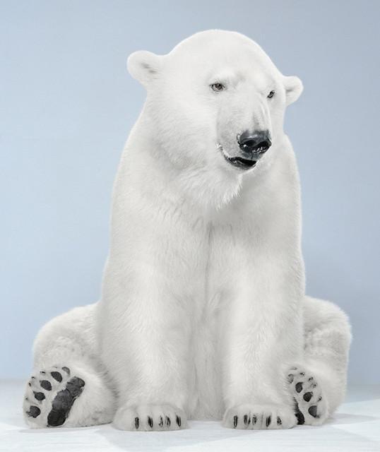 , '21-9 (Agee Polar Bear 8_10 Vancouver),' , Bau-Xi Gallery