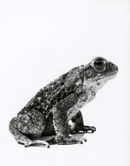 , 'Frog,' 2000, Galerie Peter Sillem