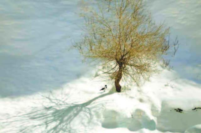 Abbas Kiarostami, 'Trees & Crows 30', 2007, Meem Gallery