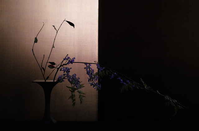 , 'japanese wisteria,' 2017, Galerie Marie-Robin
