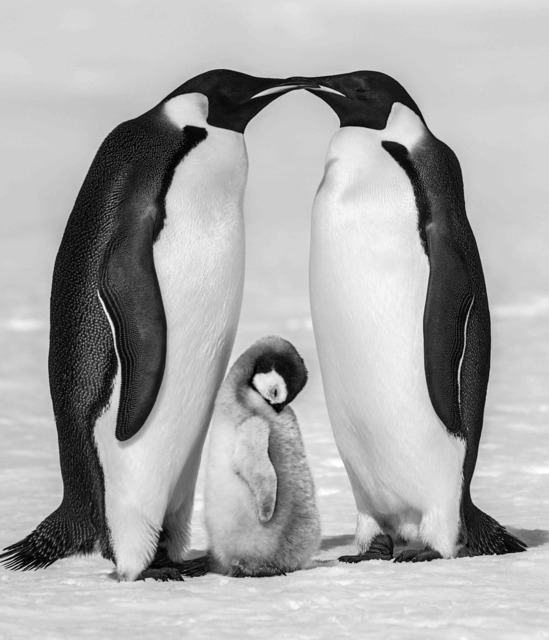 David Yarrow, 'Contentment II', 2010, Photography, Archival Pigment Print, Maddox Gallery