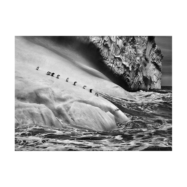 Sebastião Salgado, 'Chinstrap Penguins on an iceberg located between Zavodovski and Visokoi islands. South Sandwich Islands. ', 2009, Peter Fetterman Gallery